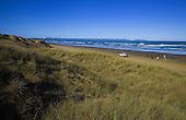 Maram grass covers sand dunes at Waipapakauri beach, Ninety Mile Beach. Tauroa Peninsula is in the distance.Far North, Northland, New Zealand.