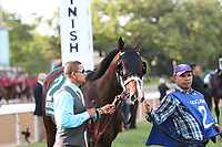 HOT SPRINGS, AR - April 15: Classic Empire #2 is walked in the infield paddock prior to the Arkansas Derby at Oaklawn Park on April 15, 2017 in Hot Springs, AR. (Photo by Ciara Bowen/Eclipse Sportswire/Getty Images)