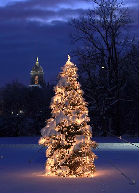 Christmas tree and Main Building