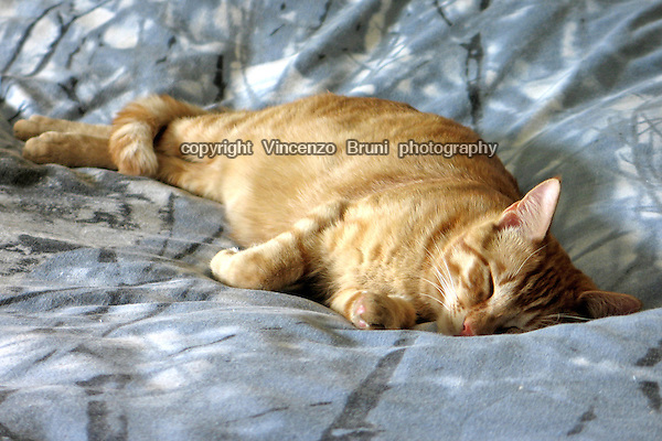 A red tabby cat sleeping on a bed