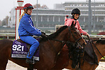 November 01, 2018 : Stillwater Cove in preparation for the Breeders' Cup on November 01, 2018 in Louisville, KY.  Candice Chavez/ESW/CSM