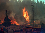 August 19, 1992 Angels Camp, California -- Old Gulch Fire— Houses and outbuildings burn in Northwood Estates.  The Old Gulch Fire raged over some 18,000 acres, destroying 42 homes while threatening the Mother Lode communities of Murphys, Sheep Ranch, Avery and Forest Meadows.