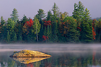 Eastern white pines and red maples<br />