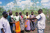 Extention agent introduces to the population trees of Moringa olifera to promote their plantation