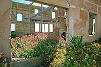 Building ruins of the warden's house, Gardens of Alcatraz, Garden Conservancy Tour