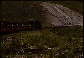 D&amp;RGW #484 K-36 with excursion train.  Cows on track.<br /> D&amp;RGW  Osier area, CO