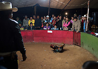Cock fight (pelea de gallos) in Valle de Bravo, Estado de Mexico, Mexico