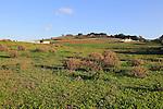 Farmland Parque Natural de Acantilado, countryside near Vejer de la Fronterra, Cadiz Province, Spain