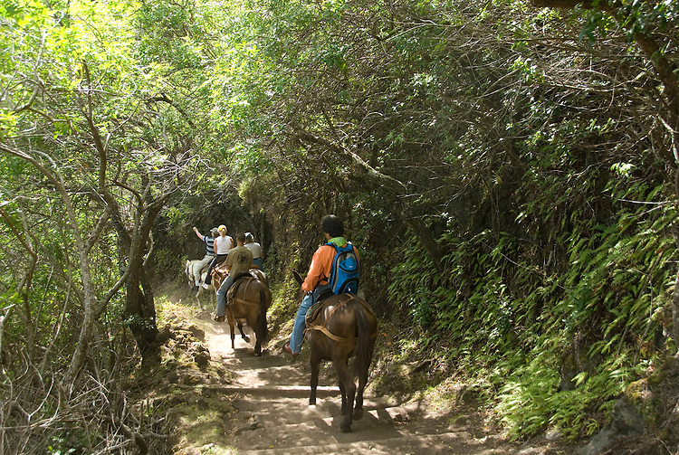Hawaii: Molokai, the Mule Ride from the cliff tops down 1,600 feet to the leper colony at Kalaupapa..Photo himolo135-71834.Photo copyright Lee Foster, www.fostertravel.com, lee@fostertravel.com, 510-549-2202