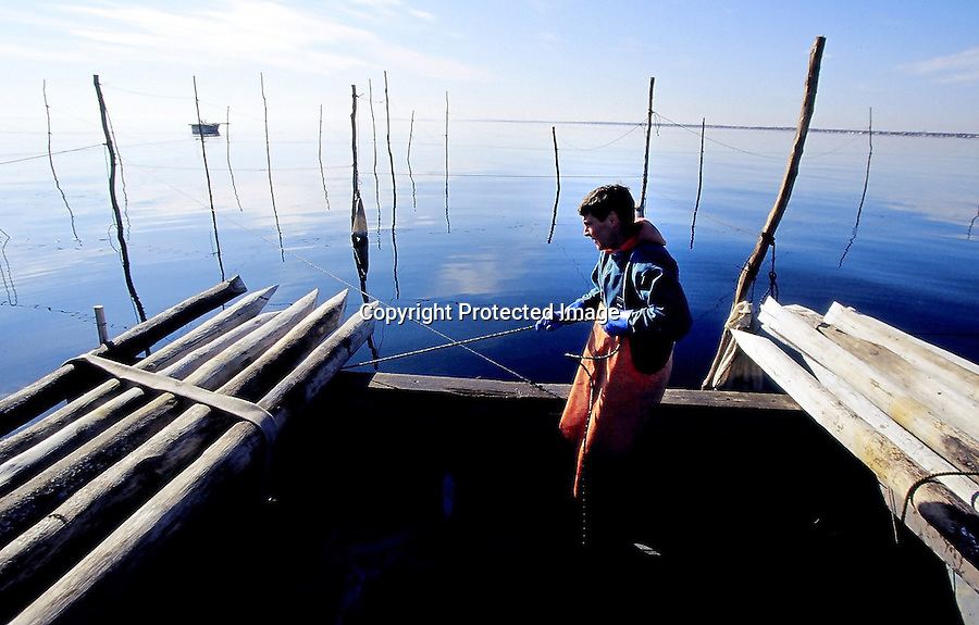 Larry Belliveau pulls the weir boat into position to drive a weir pole into the sea bed. The poles are driven into the sea bed using a hydraulic pump.