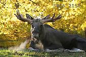 Carl, ANIMALS, wildlife, photos(SWLA2158,#A#)
