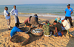 Sorting the cash on beach traditional seine fishing Nilavelli beach, near Trincomalee, Eastern province, Sri Lanka, Asia