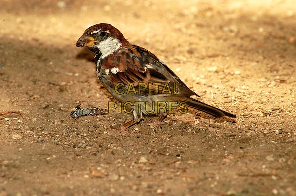 BIRD .Italy.fauna amphibian animal animal nature wildlife bird prey frog hunter hunted .CAP/CAV.©Luca Cavallari/Capital Pictures.