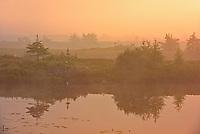 Fog at sunrise over wetland<br />Near Havre-Saint-Pierre<br />Quebec<br />Canada