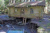 Flood-damaged, historic Ipsut Creek Ranger Log Cabin, undermined by water during the November, 2006 storms, Mount Rainier National Park.