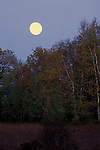 Harvest moon full moon rising rise evening