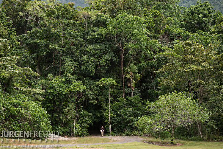 The entrance to the Daintree Rainforest Observatory's highly studied forest with Dr. Alex Cheesman coming out after collecting data from the trees.
