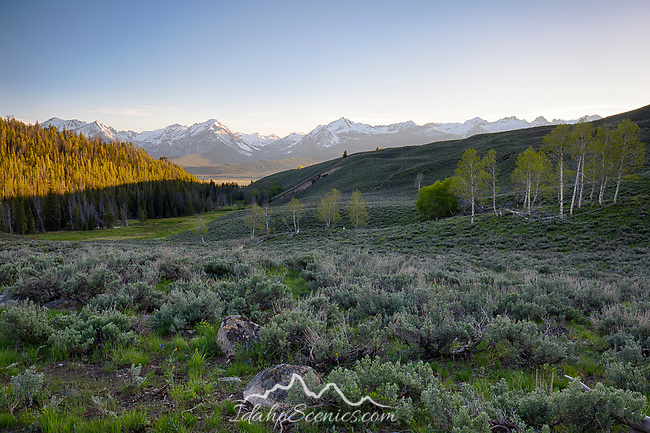 Idaho, South Central, Stanley, SNRA. Evening light on a ridge with the Sawtooth Mountains distant in late spring.
