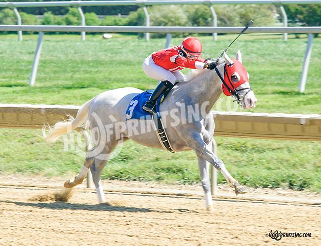 Molten Steel winning at Delaware Park on 9/14/15
