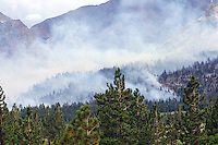 Forest Fire - Near Mammoth, CA