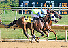 Punster #2 and O K Lefty #4 winning in a dead-heat at Delaware Park on 9/23/15