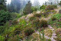 Path through coastel section of California native plant botanic garden, East Bay Regional Parks Botanic Garden