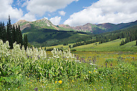 Mountain View near Crested Butte with Green Cornlily and Larkspur in the foreground