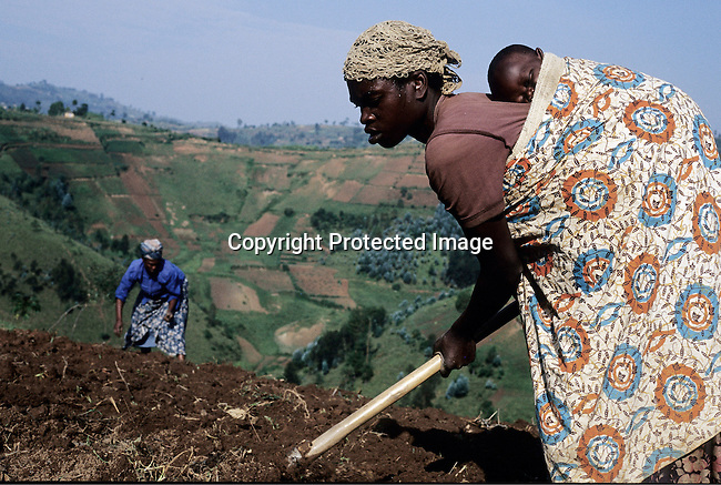 Mukangenzi Emmaculata, age 31, is working in her fields close to her village outside Mudasomwa, Rwanda. She prepares her fields for planting maize and carries her six-month-old baby girl Nafirutimana on her back on February 11, 2003 in Mudasomwa, Rwanda. During the Genocide in 1994 about 800.000 mainly Tutsis and moderate Hutus were killed in about one hundred days in Rwanda. (Photo by: Per-Anders Pettersson)