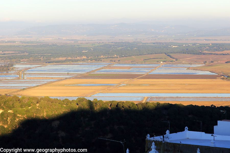 Flat paddy fields with water farmiing rice, Vejer de la Frontera, Cadiz province, Spain