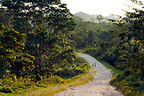 BELIZE, Punta Gorda, Toledo District, walking on the road through the jungle in the Maya village of San Jose