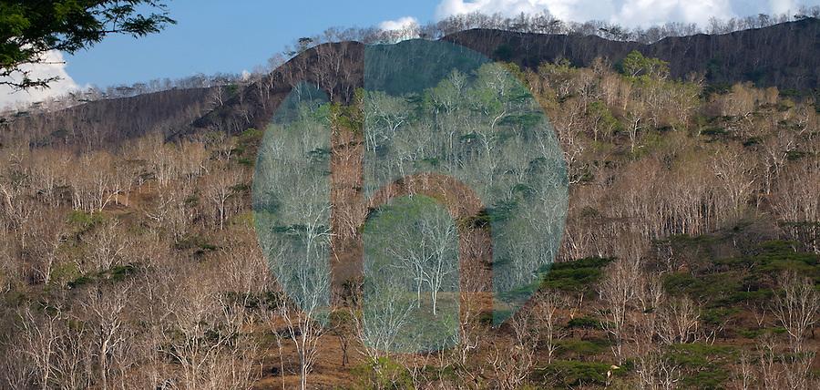 October 19th, 2011_ Manatuto District, TIMOR-LESTE_ Trees dot the dry hillsides of Manatuto District, Timor-Leste.  Photographer: Daniel J. Groshong/The Hummingfish Foundation