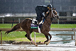 November 1, 2018: Hi Happy (ARG), trained by Todd A. Pletcher, exercises in preparation for the Breeders' Cup Turf at Churchill Downs on November 1, 2018 in Louisville, Kentucky. Alex Evers/Eclipse Sportswire/CSM