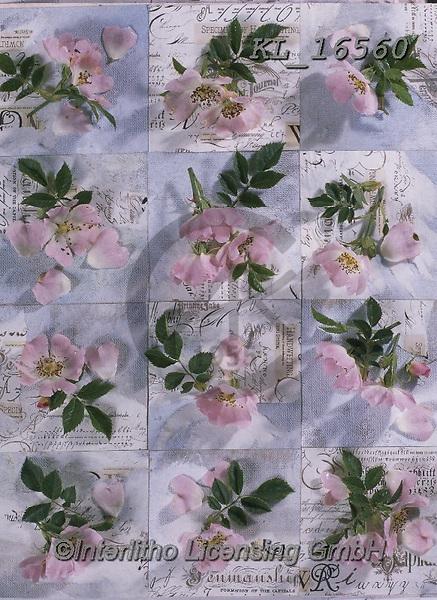 Interlitho-Alberto, FLOWERS, BLUMEN, FLORES, photos+++++,flowers,KL16560,#f#, EVERYDAY