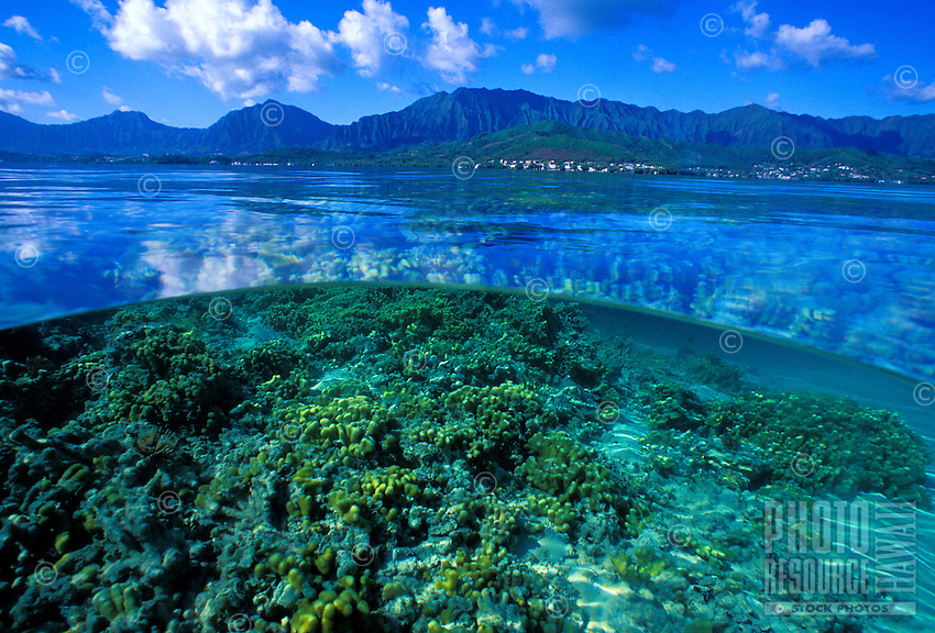 This over/under photo shows some of the variety of corals living in the warm waters of Kaneohe bay.