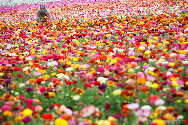Worker in a flower field