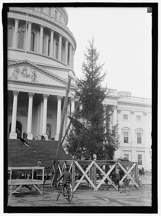 UNITED STATES - DEC 1913: The 1913 40-foot Norway spruce Christmas tree gets set up and located on the East Front plaza of the U.S. Capitol The tree was later adorned with red, white, and blue electric bulbs. The celebration boasted a lighted placard with the inscription, ?Peace on earth, good will to men,? nativity scenes, and a large chorus which sang Christmas hymns. During the Christmas Eve celebration, the Marine Band played the national anthem, and in keeping with the spirit of community cooperation, Boy Scout troops assisted the Capitol Police with crowd control. The popular holiday tradition resumed in 1914, but abruptly ended the following year due to a lack of funds. ?Shock Awaits Santa Claus: No Community Christmas Tree Will Be at the Capitol for Him,? a Washington Post headline declared. ..The 2012 U.S. Capitol Christmas Tree was harvested in the White River National Forest in Colorado. On November 2 the 2012 version will arrive in front of the Capitol on November 26th..(Photo By Douglas Graham/CQ Roll Call)
