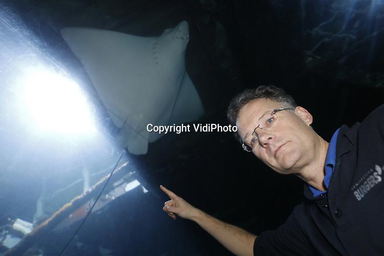 Foto: VidiPhoto<br /> <br /> ARNHEM - Bioloog Max Janse (foto) en dierenarts Henk Luten van Koninklijke Burgers' Zoo in Arnhem hebben voor het eerst ter wereld op succesvolle wijze anticonceptie toegepast bij een vissoort. Internationale kweekprogramma's voor haaien- en roggensoorten hebben als doel om genetisch gezonde aquariumpopulaties in stand te houden, zodat er geen dieren meer uit het wild gehaald hoeven te worden. Voor wat betreft de beschermde soorten kunnen daarnaast in de toekomst mogelijk zelfs dieren teruggezet worden in de natuur. Bij de gevlekte adelaarsroggen van de soort Aetobatus ocellatus waarvan Burgers' Ocean de grootste kweker ter wereld is, was een luxesituatie ontstaan. Bij twee zeer succesvol kwekende vrouwen dreigde een oververtegenwoordiging van hun genetische materiaal in de Europese populatie adelaarsroggen. Eén van de volwassen vrouwen is verhuisd. Bij de andere vrouw is voor het eerst ter wereld op succesvolle wijze anticonceptie toegepast door in de linker borstvin een anticonceptierietje te implanteren. Bij vissoorten is het pas de eerste keer dat deze methode succesvol is geïmplementeerd. Deze doorbraak heeft verstrekkende gevolgen voor de Europese kweekprogramma's van diverse vissoorten. Met deze extra methode van populatiebeheer kunnen de programma's nog gerichter worden gemanaged.