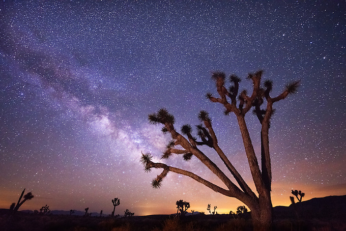 A large joshua tree frames the summer constellation of the Milky Way, photographed in the wilderness of Death Valley.