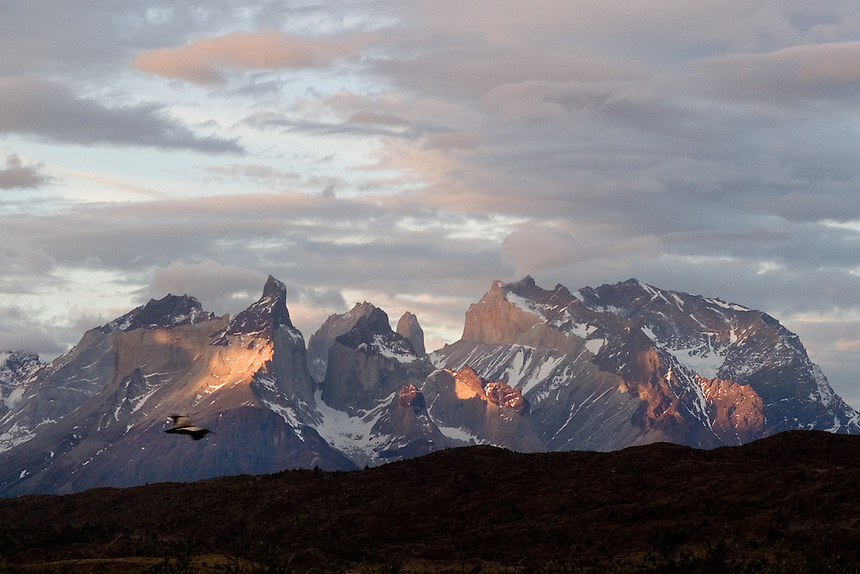 A grebe flies in front of the Paine massif, with it's distinctive cuernos, or horns, at center at Torres del Paine National Park in southern Chile. (Kevin Moloney for the New York Times)