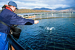 Inland Salmon farm cages on the West Coast of Scotland