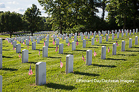 65095-01718 Flags on Memorial Day at Jefferson Barracks National Cemetery, St Louis, MO