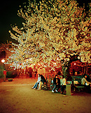 JAPAN, Kyushu, people sitting on bench under blooming cherry blossoms