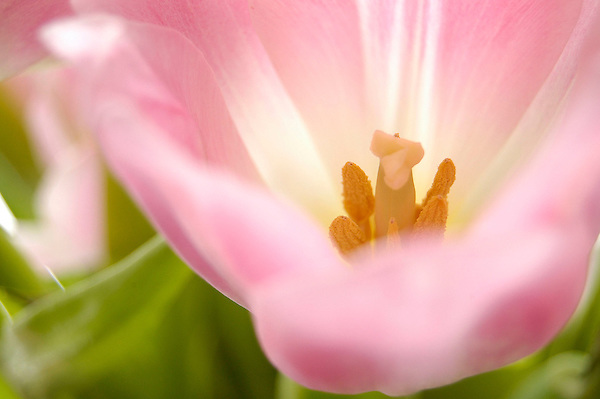 Spring Tulip Delight