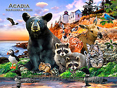 Howard, REALISTIC ANIMALS, REALISTISCHE TIERE, ANIMALES REALISTICOS, paintings+++++Acadia poster,GBHRPROV111,#A# ,puzzles