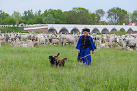 A traditional Hungarian herdsman walks front of his herd of Grey cattles in the Great Hungarian Plain (Puszta) in Hortobagy, 200 km (124 miles) east of Budapest April 30, 2011. Every spring around St. George's Day, Hortobagy celebrates the beginning of the new grazing season. ATTILA VOLGYI