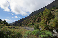 Spain, Canary Islands, La Palma, near Los Llanos de Aridane: Barranco de las Angustias