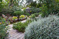Wooden boardwalk leading from path edged with Bush Germander (Teucrium fruticans) over backyard pond filled with rainwater harvested from roof and stored in cisterns; Judy Adler Garden, Walnut Creek, California