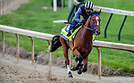 LOUISVILLE, KENTUCKY - APRIL 28: By My Standards, trained by W. Calhoun, exercises in preparation for the Kentucky Derby at Churchill Downs in Louisville, Kentucky on April 28, 2019. John Voorhees/Eclipse Sportswire/CSM