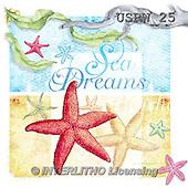 Randy, STILL LIFE STILLLEBEN, NATURALEZA MORTA, paintings+++++C-Sea_Dreams,USRW25,#i# maritime,sea shells