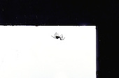 Charlotte the spider hangs from a thread in Upper Bucks County, Pa. on Tuesday August 27, 2002. photo by jane therese